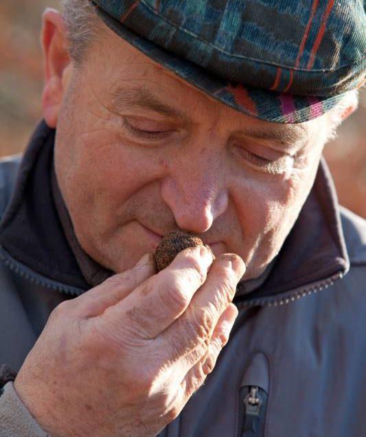 WebTruffes, l'authentique truffe noire du Périgord à portée de clic